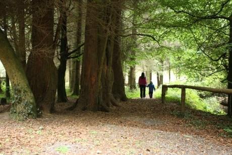 Derrycassin Woods, Granard