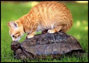 Funny picture of cat and tortoise.
