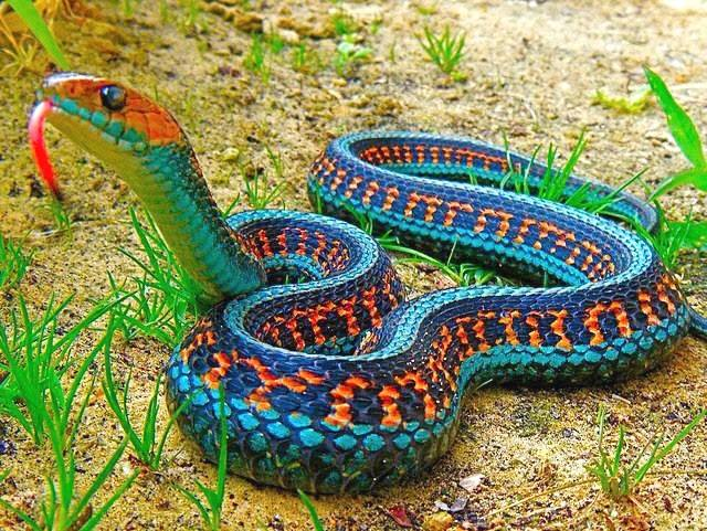 fascinating facts about snakes
