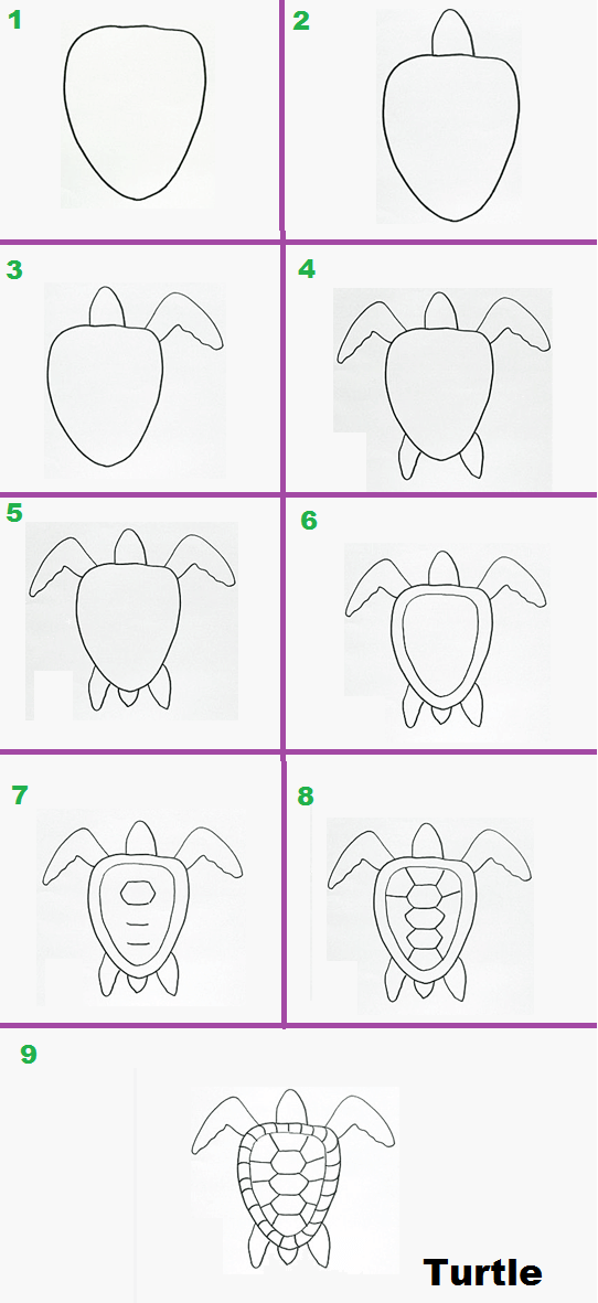 Easy step by step drawings of turtle