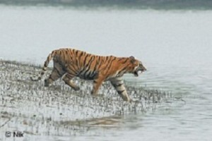 sundarban tour, sundarban travel