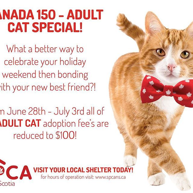 Who's looking to spend this Canada day weekend bonding with their new bestie?! To celebrate Canada 150th birthday we have reduced the adoption fee for adult cats at our shelters to $100! There couldn't be a better time to bring home a new furry friend! Check our shelters for individual hours of operation! . . . #adoption #cats #adultcats #rescue #adoptdontshop #canadaday #canada150 #catsofhalifax #catsofinstagram #hfxcats #shelterpetsrock