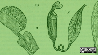 9 rules for the proper care and feeding of communities and carnivorous plants