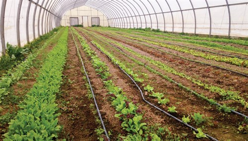greenhouse - crops