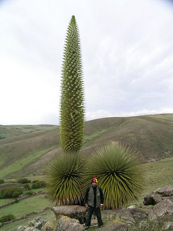 世界上最大的花簇_生物世界之