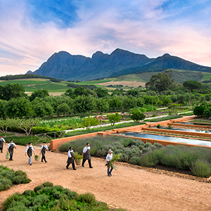Babylonstoren Valley