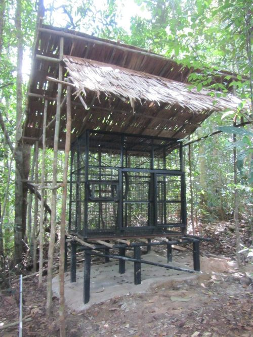 Completed temporary sleeping cage at the orangutan rehabilitation facility in the village of Tembak, west Borneo