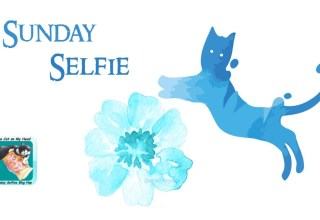 2018 Sunday Selfie Dash Kitten