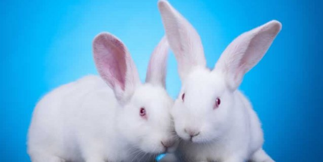 New Study: More Proof That Animal-Derived Antibodies Pose Big Problems