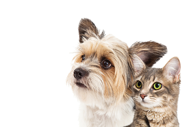 Should we feed cats and dogs a vegan diet?