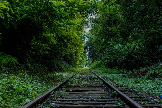 overgrown train tracks