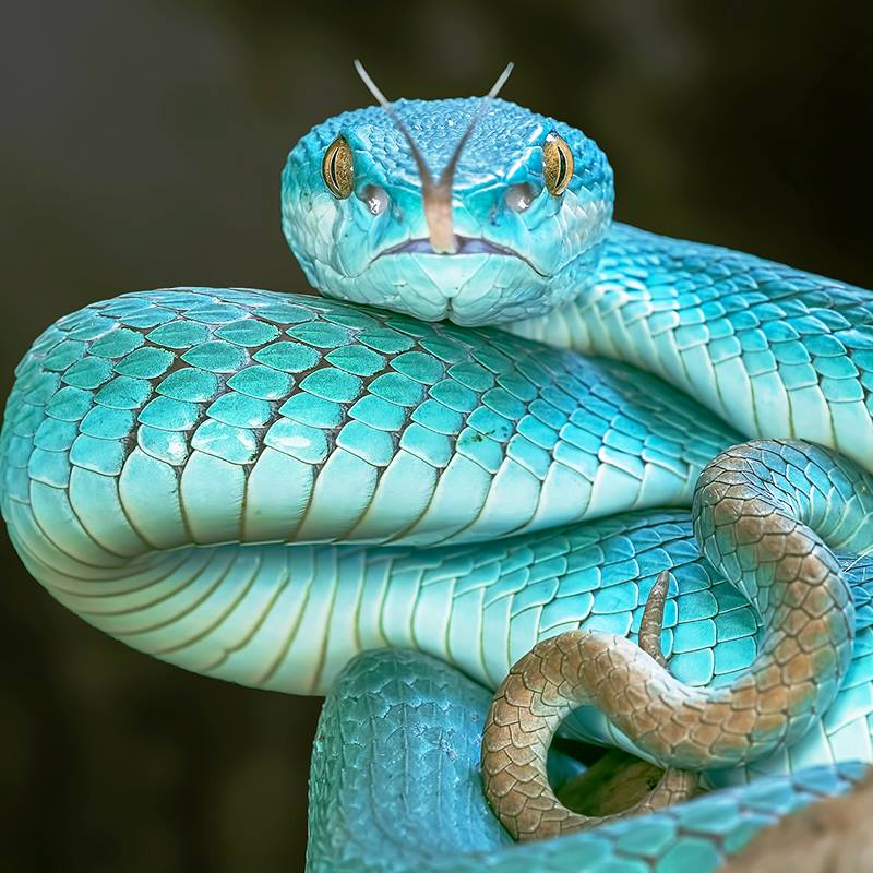 strangest facts about snakes