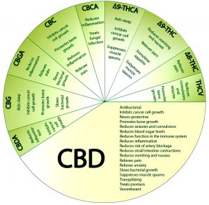 Cbd oil and its benefits