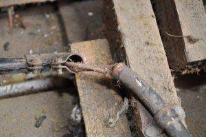 inspection building sydney
