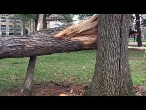 Video: Trees downed in afternoon storms in Akron park