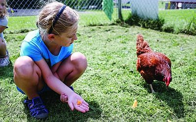Children at James and Rachel Levinson Day Camp tend the chickens as part of a summer camp program of experiential learning and fun. (Photo courtesy of the JCC of Greater Pittsburgh)