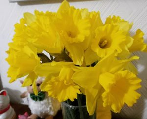 Daffodils today