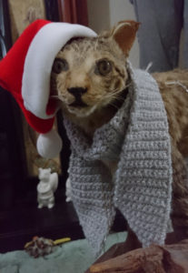 A taxidermy wildcat wearing a crochet scarf and a Santa hat/