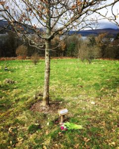 A young oak tree, dedicated to Emma's mum.