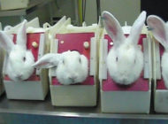Rabbits In Stocks Cosmetic Testing 1