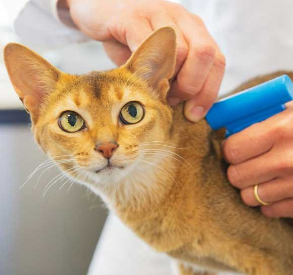 Pet Microchipping