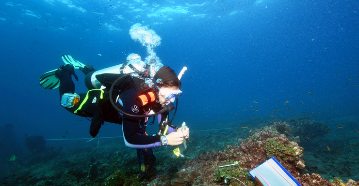 A researcher in a diving suit exploring the Varadero reef.