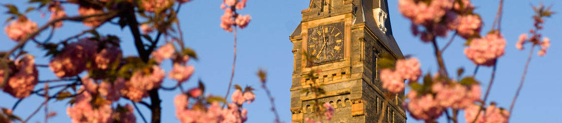 View of Healy Clock Tower surrounded by cherry blossoms