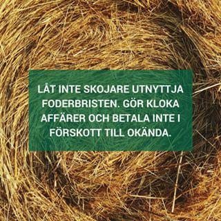 Den enes död, den andres bröd heter det ju. Torkan lurar fram diverse skojare som försöker sko sig på djuruppfödare i desperat behov av foder. Se till att kolla upp säljaren och betala inte i förskott om du inte är helt säker på att du kommer att få leverans.  #enbonde #vifårlandetattväxa #lantbruk #jordbruk #väljsvmat #swedishfarmers #farmer #torka #väljsvmat