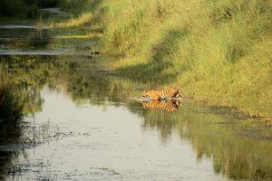 Bardia Tiger Adventure
