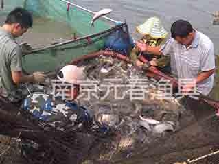 收网 收获捕鱼场景
