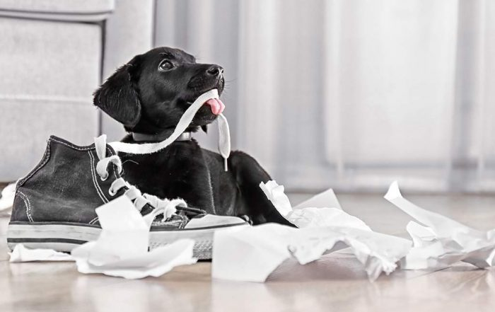 Story About Dog Chewing