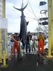Mar 30, 2003. ?Mike Corell boats a 669 lbs. Blue Marlin with Scot Spencer at gaff. (l-r) Deb Townsend, Scot, Mike Corell, Wendy Stevens, and Capt Rusty.