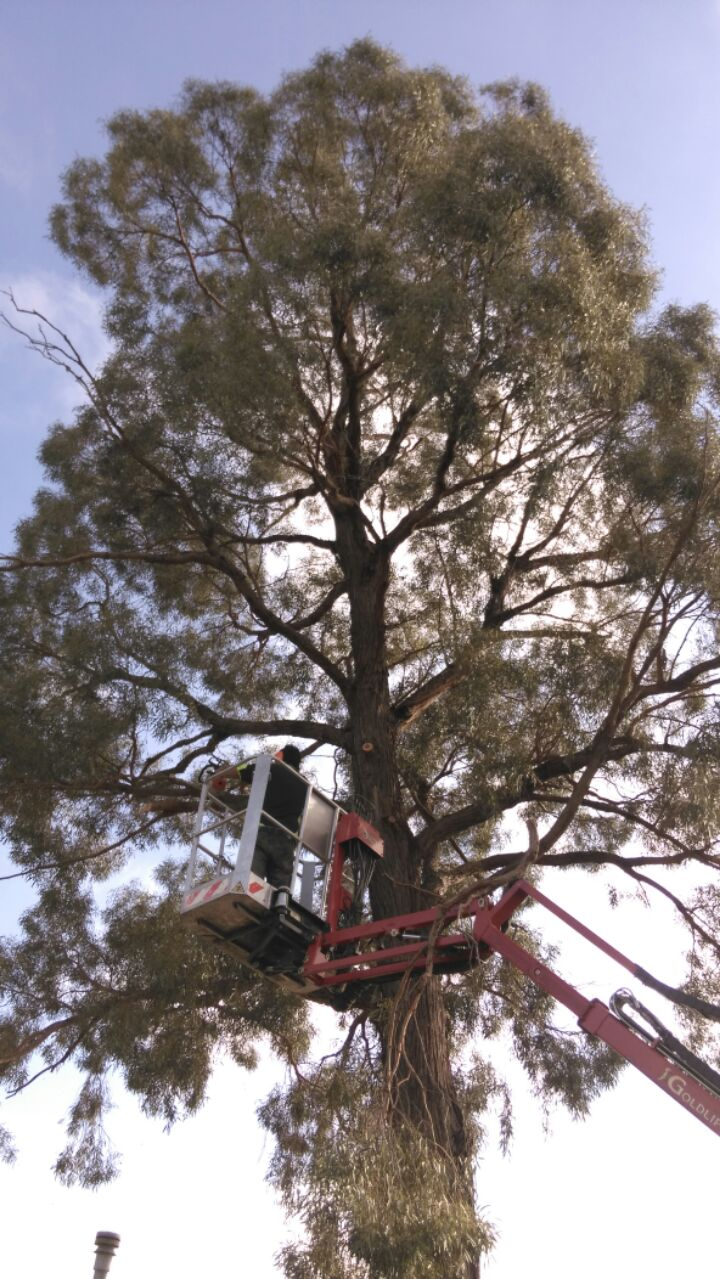 tree removal werribee