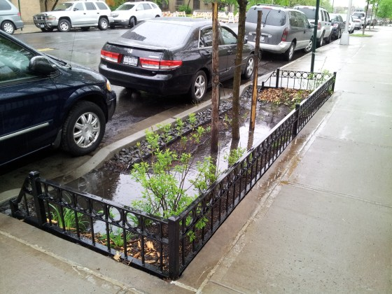 Right-of-way-bioswale Post Rain