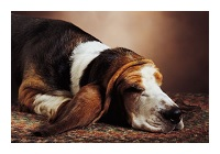 The loss of a pet in the home can be difficult, but being prepared can help ease the pain.