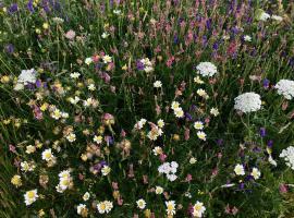 Wildflowers can flourish in chalk grassland