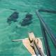Dolphins near boat