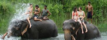 Nepal Wildlife Tour Packages