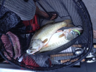 Two 8 lb plus a bass netted at the same time by guide.