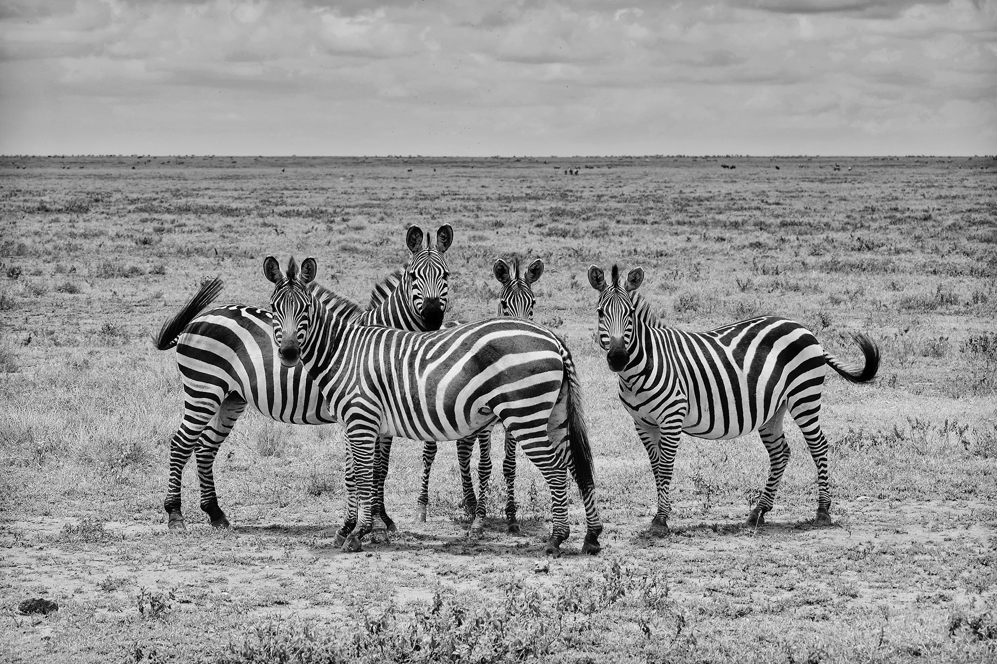 """WHEN YOU HEAR THE SOUNDS OF A HOOVES YOU THINK HORSES NOT ZEBRAS. WE ARE THOSE ZEBRAS."