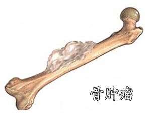 横跨11省区病死猪肉案告破涉案总金额逾亿元揭阳新闻