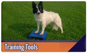 dog agility training tools