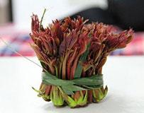香椿芽采摘