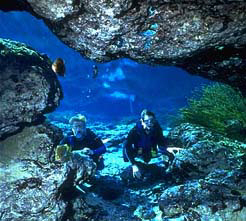 Dive Trips Ginnie Springs