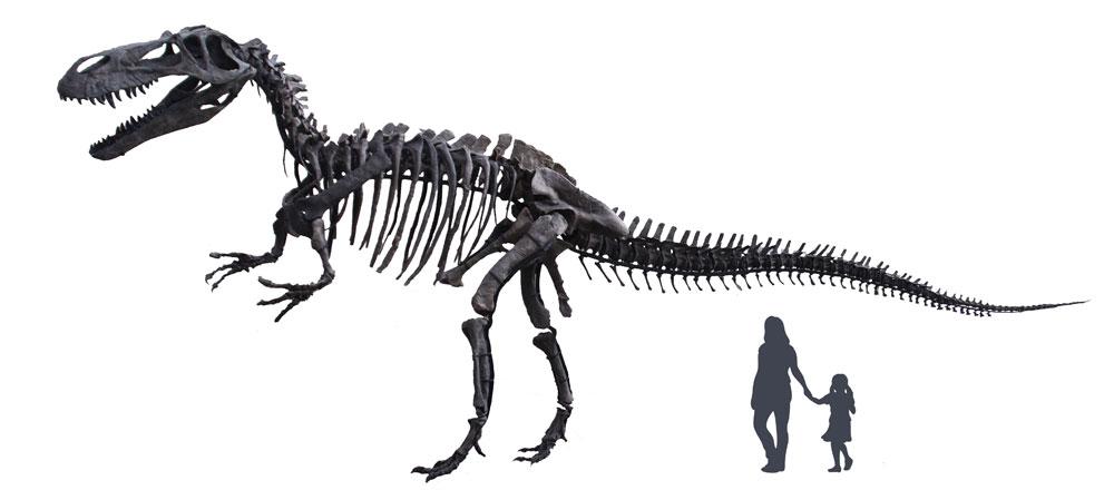 Torvosaurus-parking-full-no-background