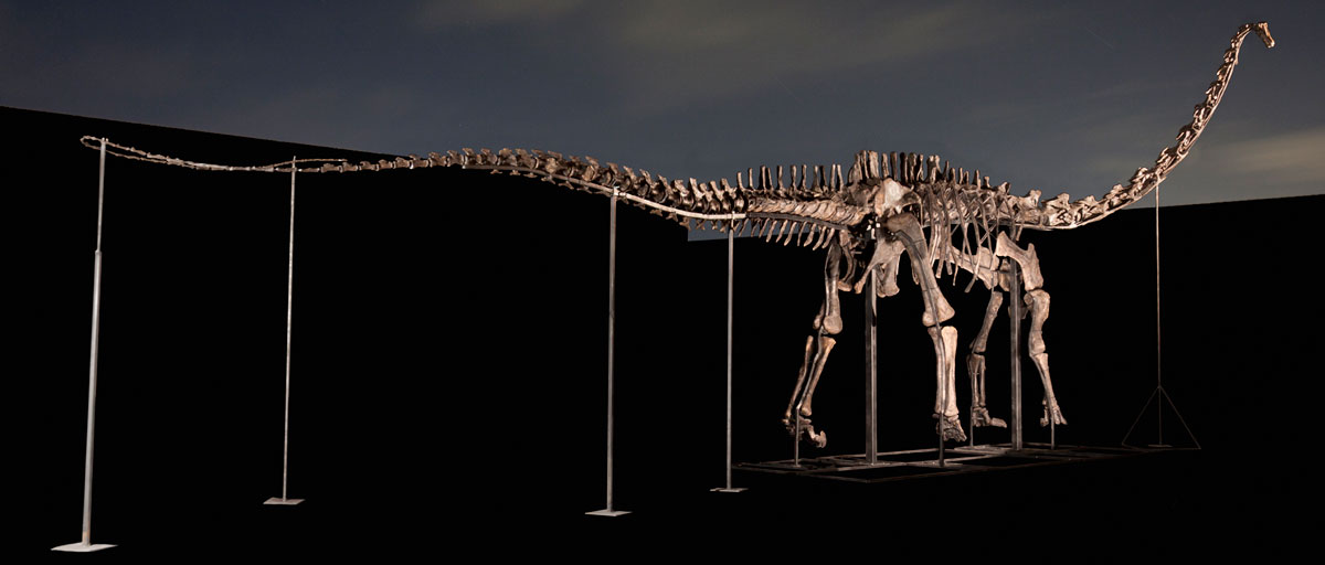 Fossil_2315