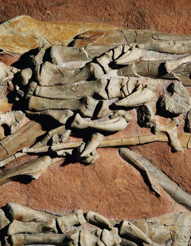 tenantosaurus-left_hind_foot