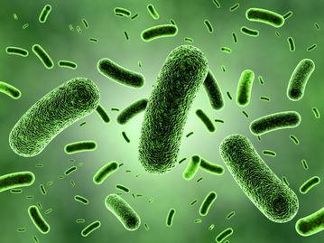 ILC -III介导微生物特异性