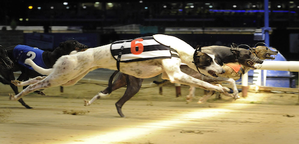 Special features and tricks of greyhound betting
