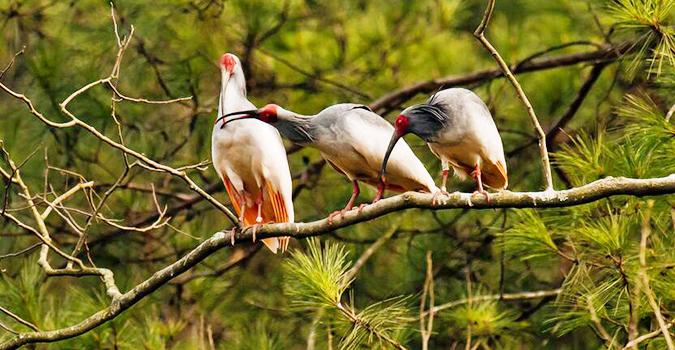 【图】世界上最珍稀的十种鸟:神出鬼没的鸟类它居然排名第二!